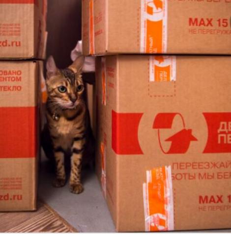 Привыкание кота/кошки к новому месту