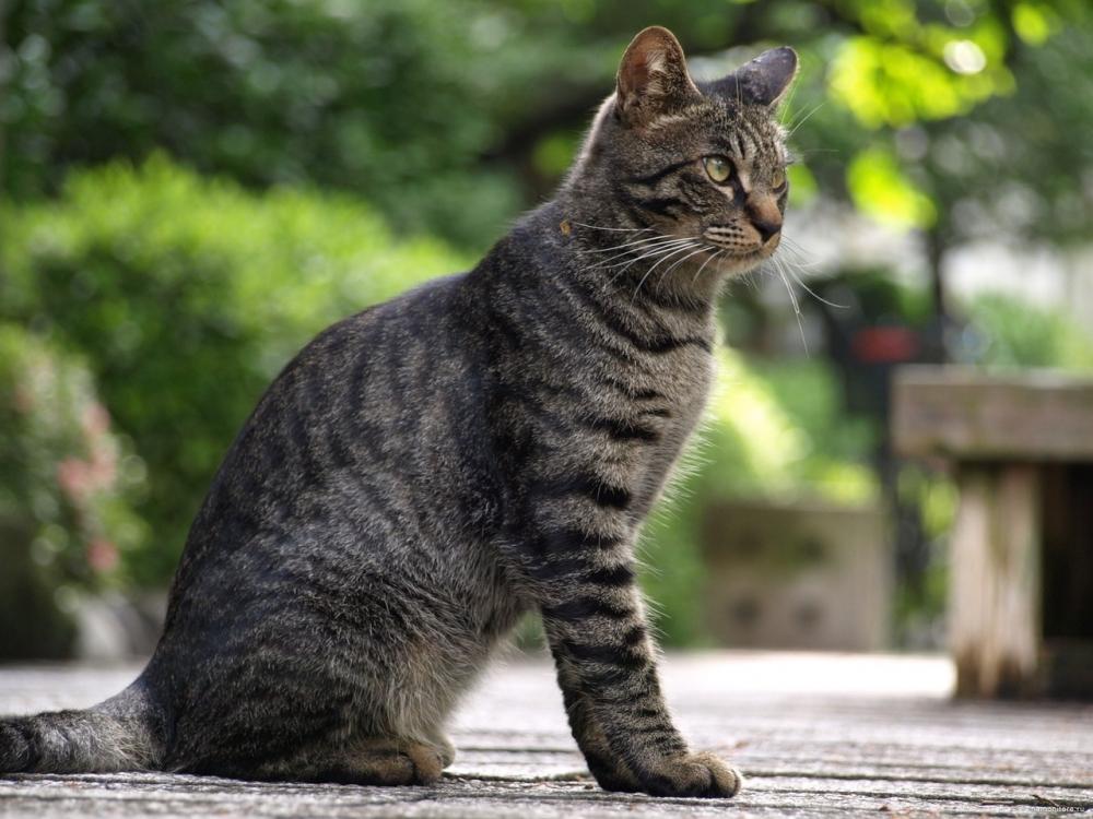 Мы наконец-то знаем, что делает кошек полосатыми!
