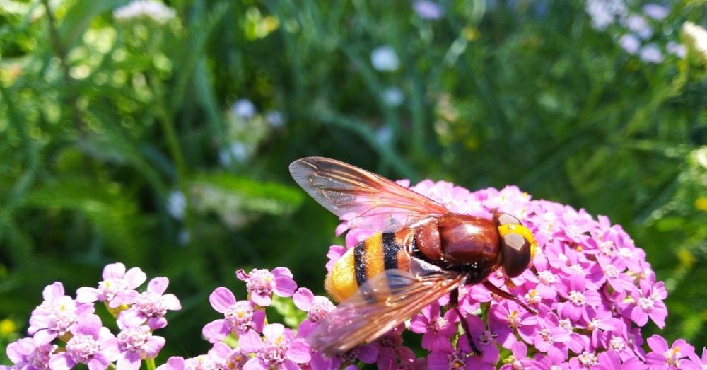 Любопытство о пчелах - то, чего вы не знали о жизни пчел