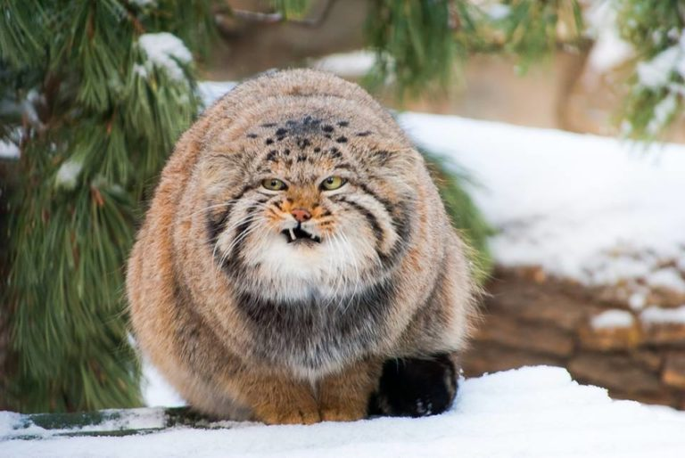 10 редких видов животных в России