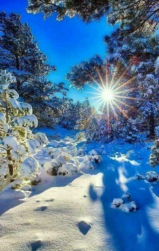 Зима в творчестве великих поэтов!