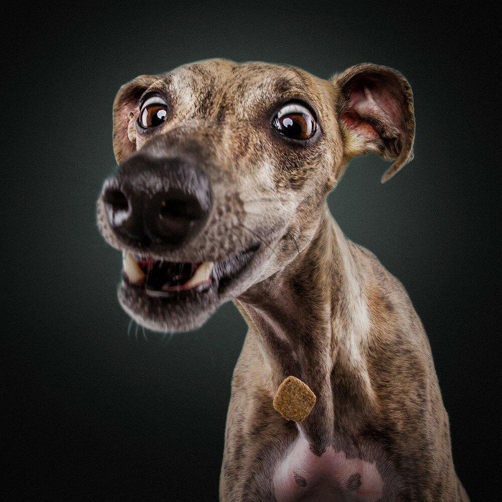 цветокоррекция смешная картинка пса схема используется основном