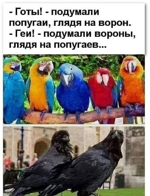 Смешные картинки с попугаями