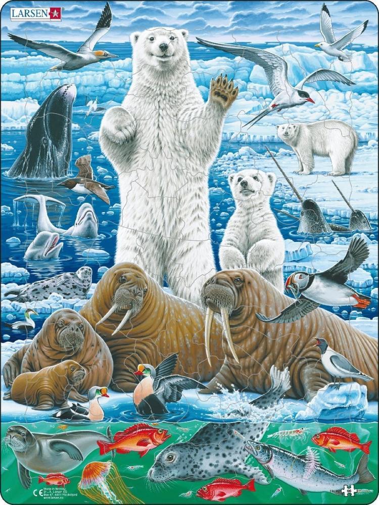 Смешные животные севера и Антарктиды