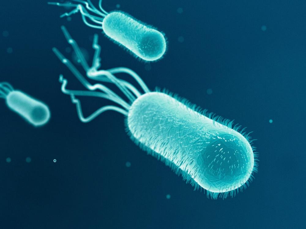 Бактериальную клетку от окружающей среды отделяет: