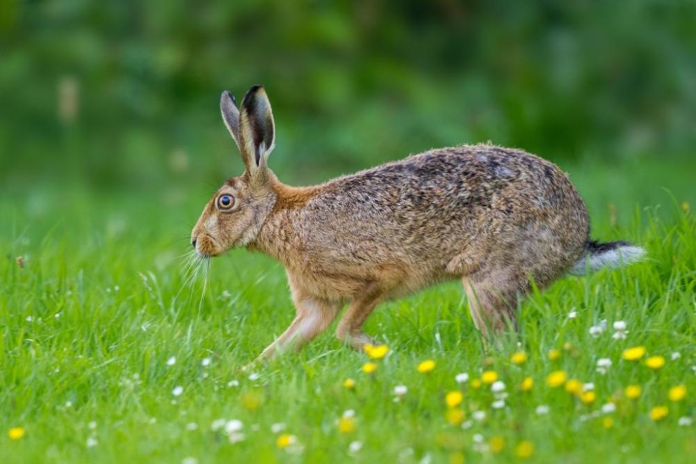 Установить соответствия между животным и чем оно питается: Заяц