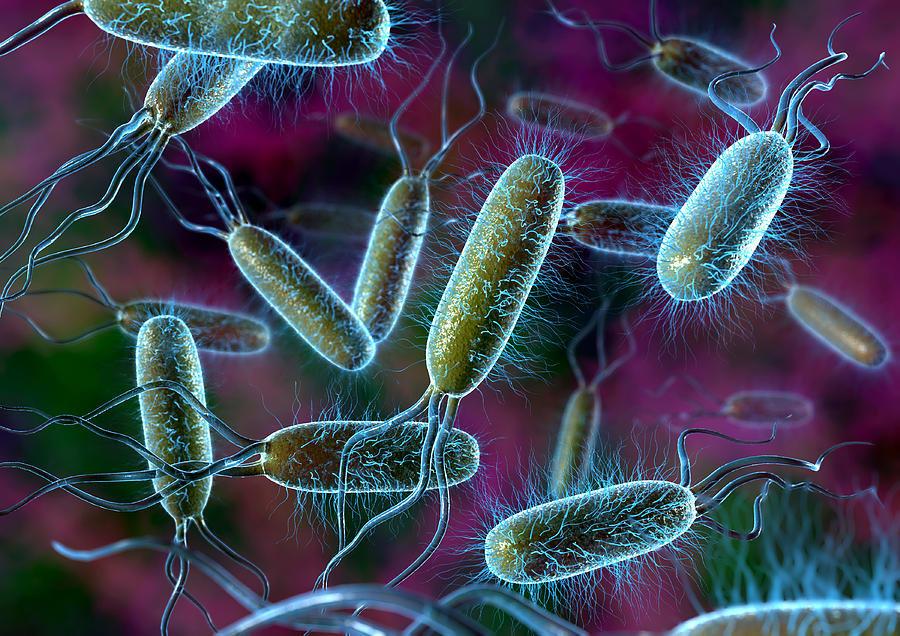 Бактерии, питающиеся отмершими организмами и участвующие в разложении, называются