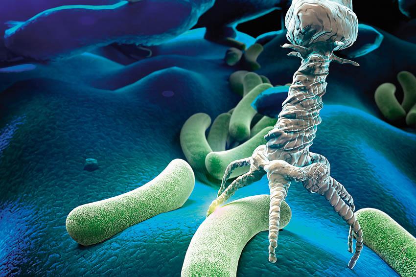 Шарообразные бактерии называются