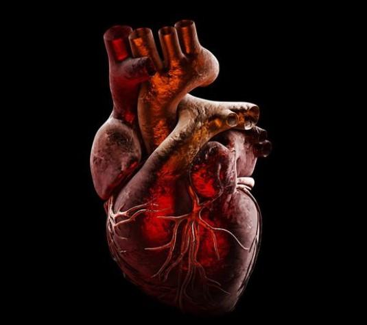 Какая из этих оболочек сердца является внутренней?