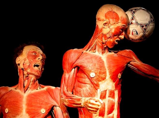 Какое из этих проводящих образований человека имеет меньший диаметр?