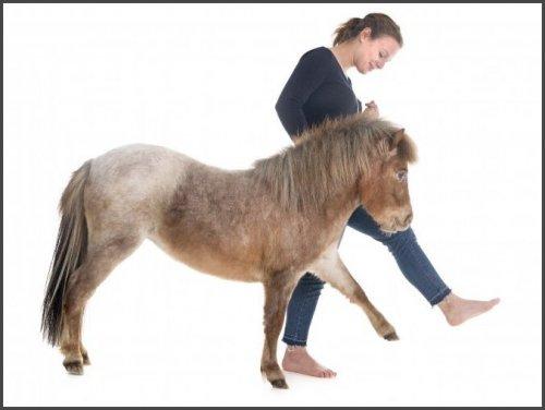 Это — миниатюрная порода лошадей, выведенная в Аргентине более 100 лет назад. Рост этих лошадок колеблется от 40 до 75 см. Они непригодны для верховой езды даже для детей и содержатся как домашние любимцы.