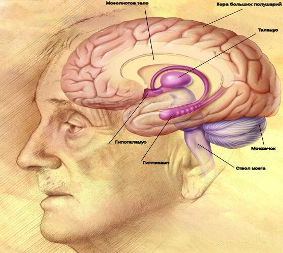 Сколько процентов объема головного мозга мы используем?