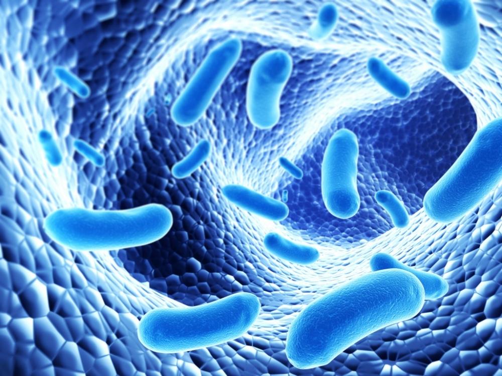 Чем питаются бактерии сапротрофы?
