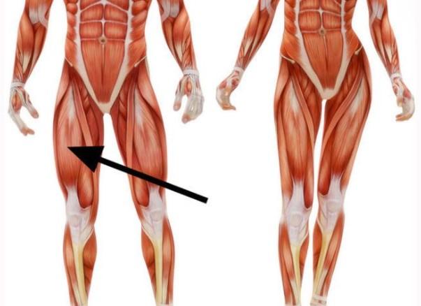 Как называется эта мышца?