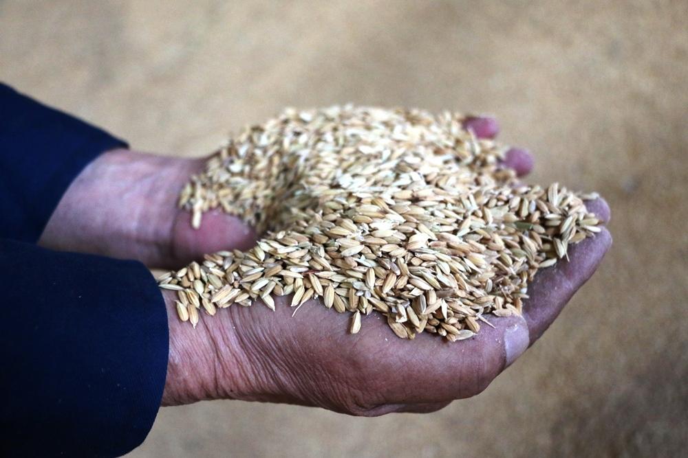 Какая страна является лидером по производству риса?