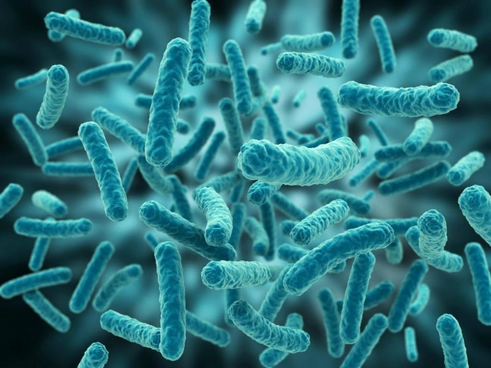Какая группа бактерий улучшает азотное питание растений?