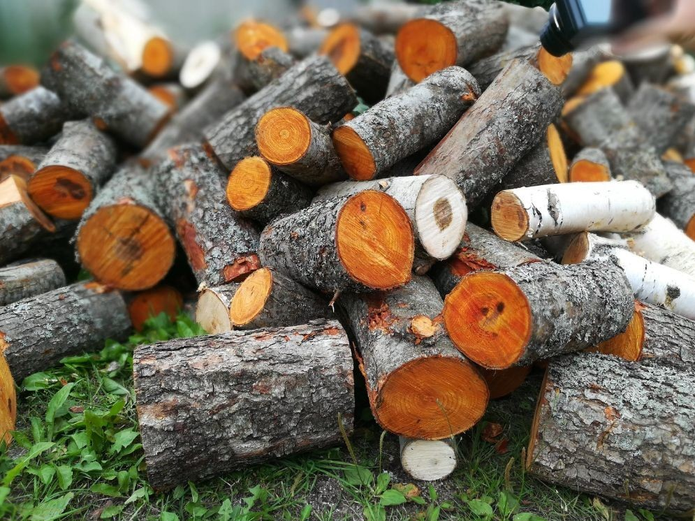 Какие дрова лучше не использовать для приготовления шашлыка?