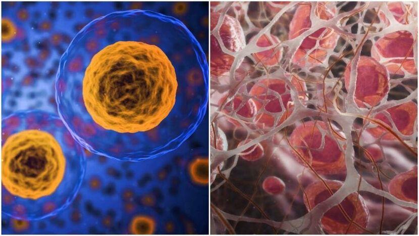 Когда рождаются последние клетки головного мозга?