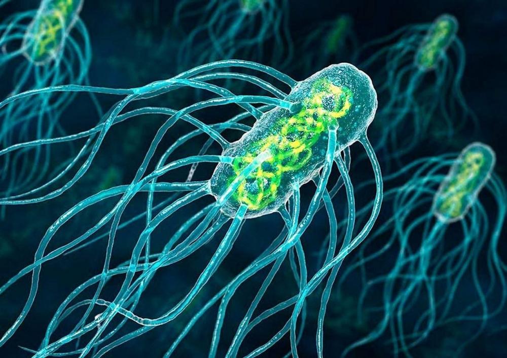 Бактерии – очень древние организмы, так как они: