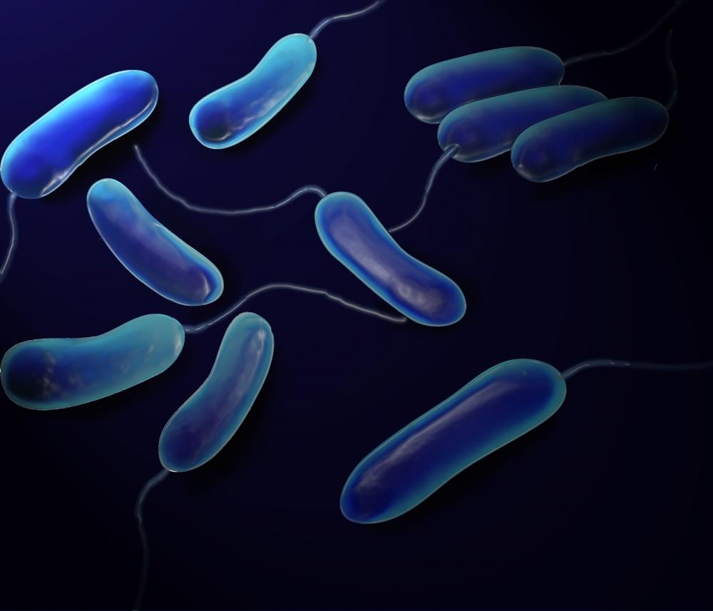 Почему бактерии относят к прокариотам?
