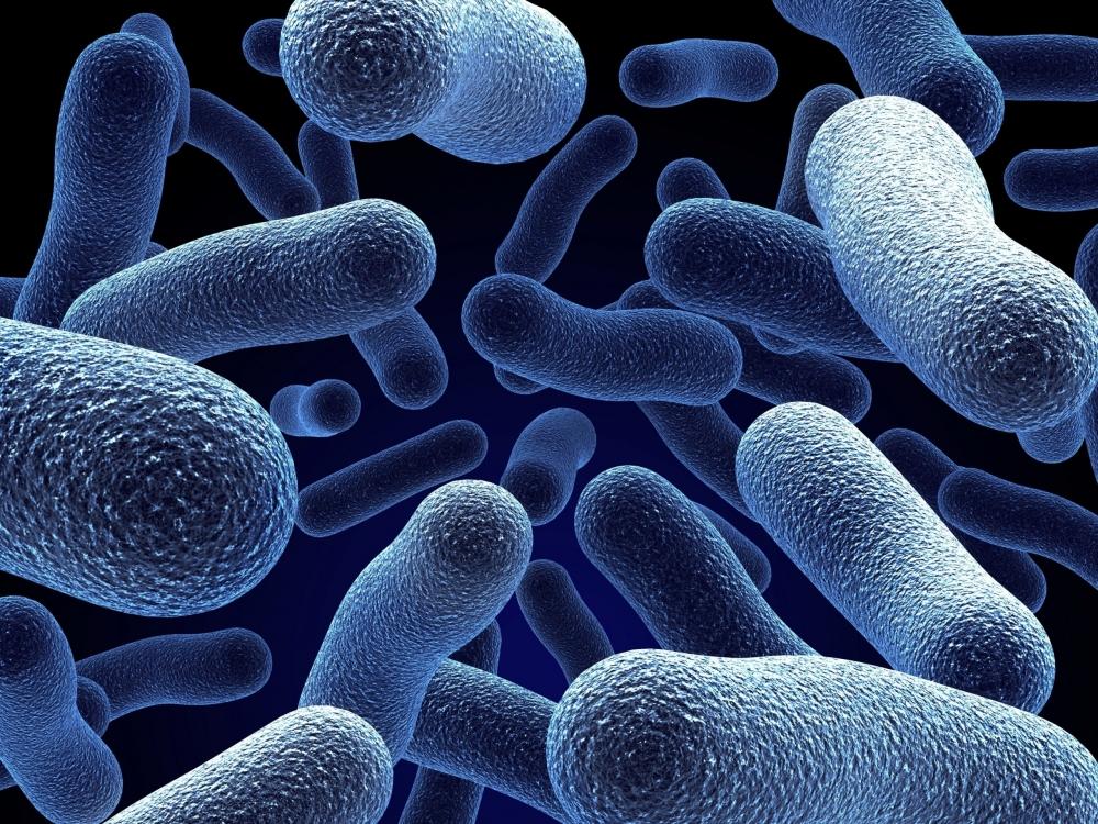 Бактерии - организмы