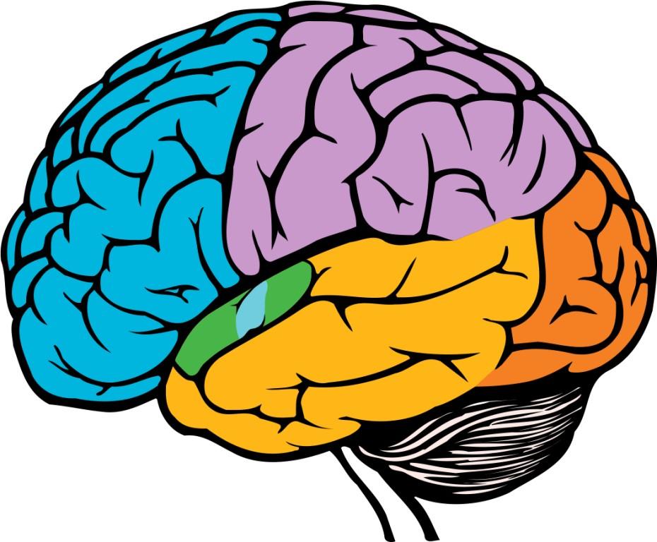 Ваш мозг потребляет приблизительно столько же электричества, как и