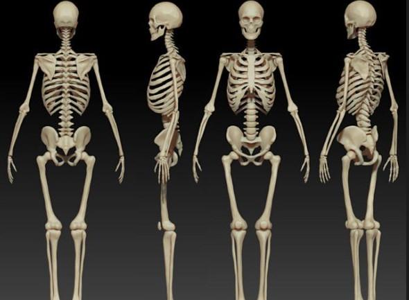 Как называется самая длинная кость в человеческом теле?