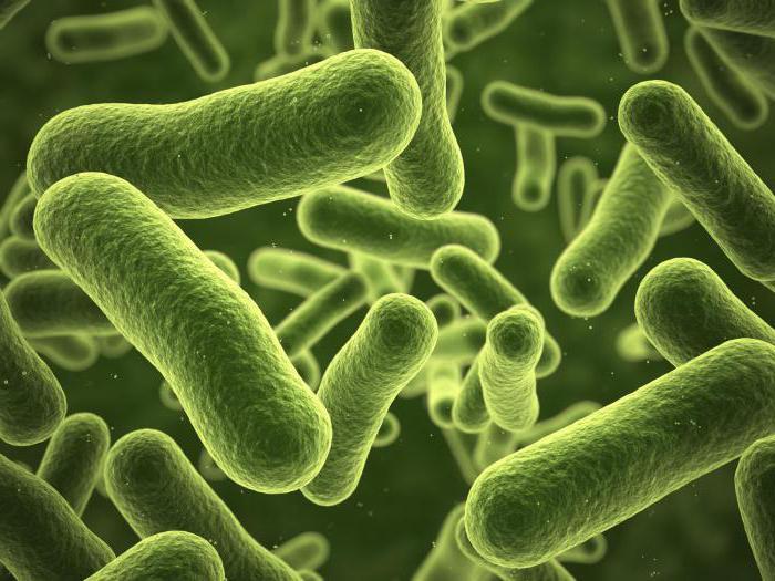Бактерии размножаются путем