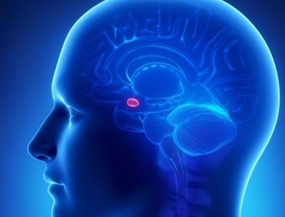 Что такое эндокринная система?